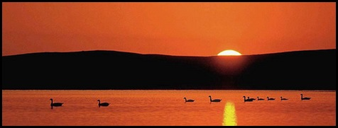 Ducks at Dawn - By photo61guy -Flickr
